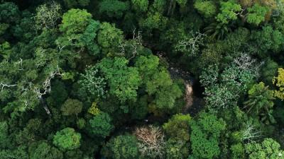 tropical-rainforest-benefits