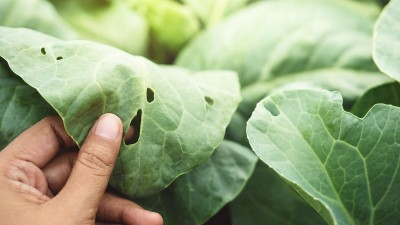how-to-get-rid-common-garden-pests