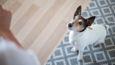 how-to-train-your-dog-to-sit