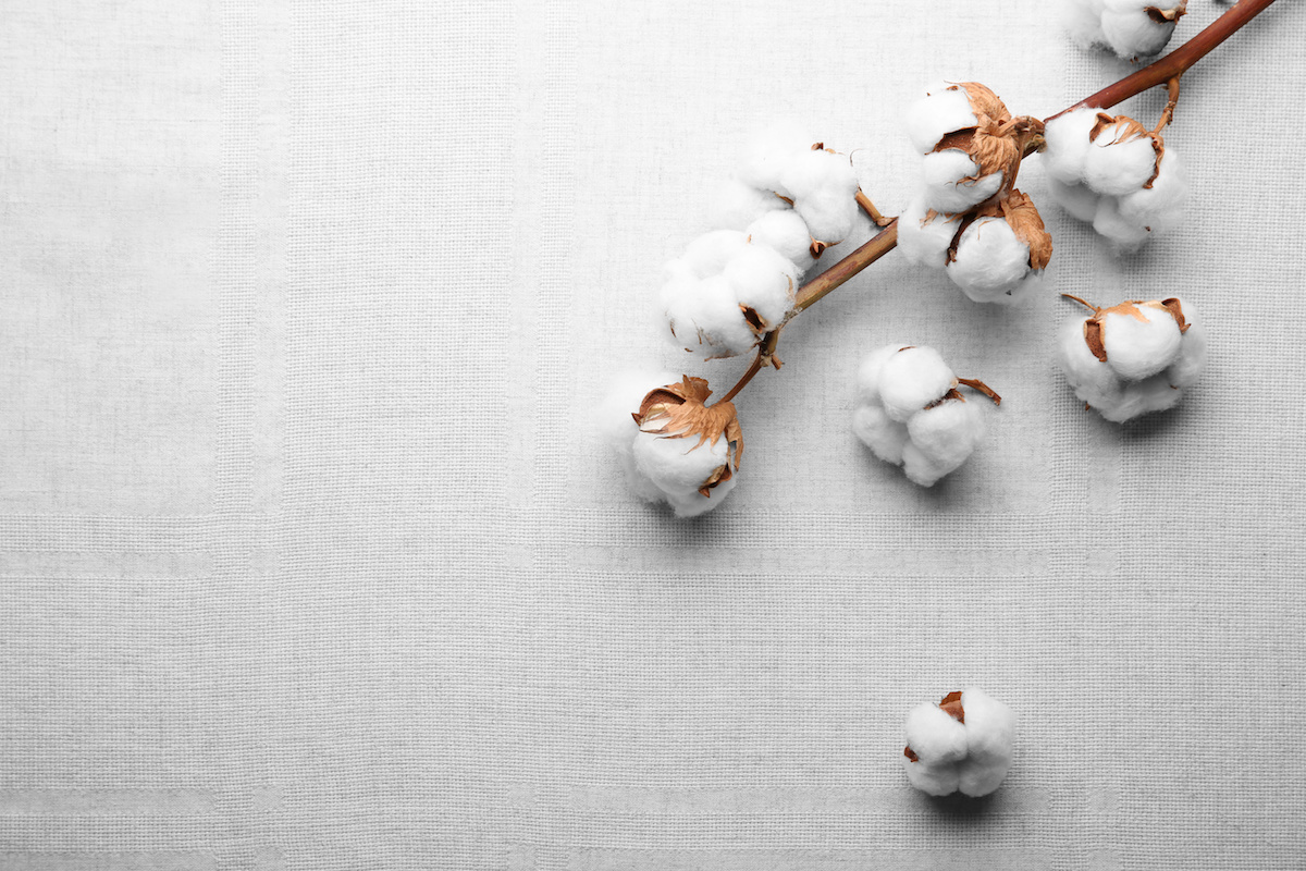 What Is Cotton A Complete Guide To The History Characteristics