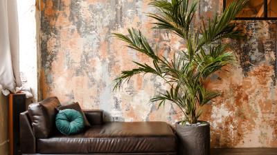kentia-palm-care-guide