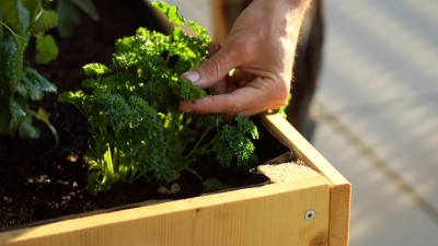 how-to-grow-parsley-in-your-herb-garden