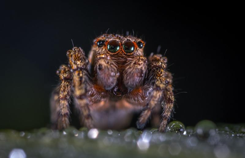 Complete Macro Photography Guide for Beginners - 2019