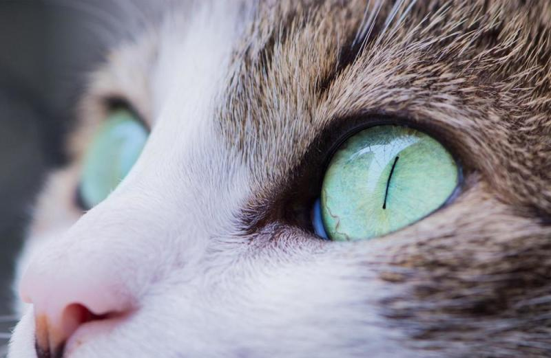 Close up on a cat's eyes