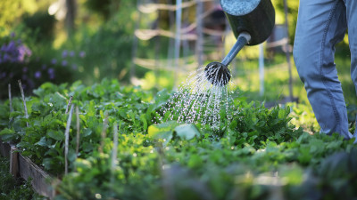 how-to-start-a-backyard-garden