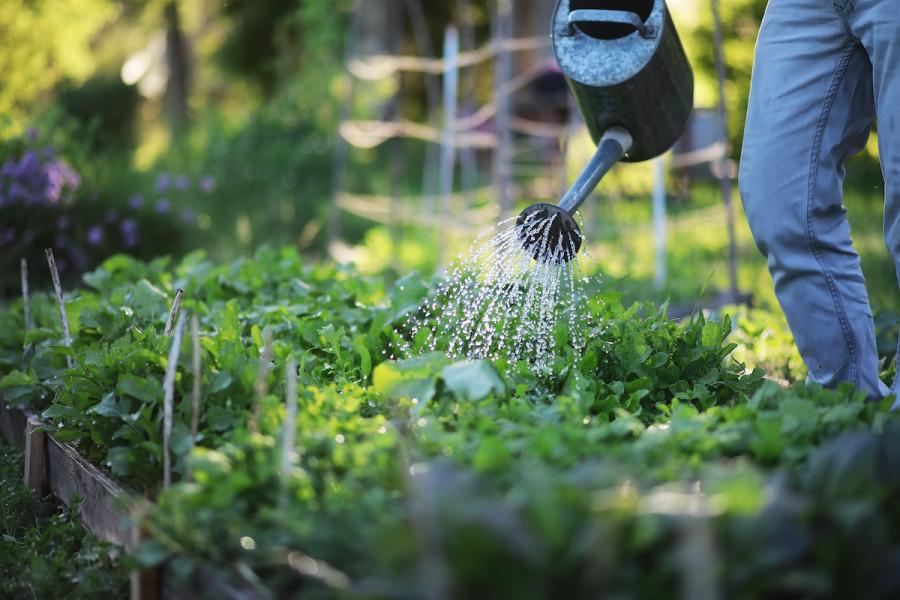 How To Start A Backyard Garden 11, Tips For Starting A Garden