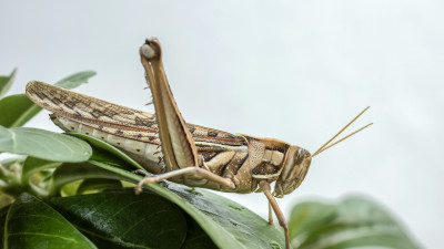 how-to-get-rid-of-grasshoppers-explained
