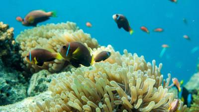 biodiversity-guide