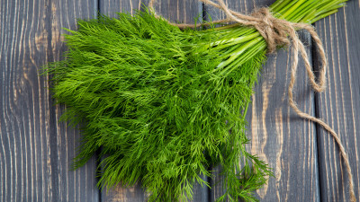 Bunch of fresh dill tied with twine on wood