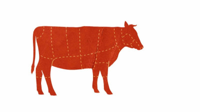 Red diagram of cow with dashed lines