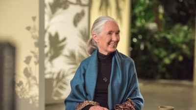 dr-jane-goodall-life-and-work