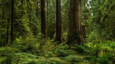 learn-about-temperate-rainforests