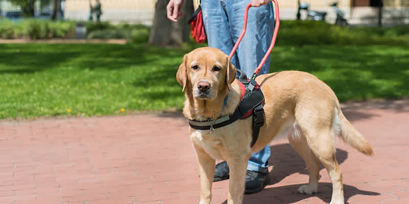 New Guidelines from HUD Aid Boards Reviewing Requests for Assistance Animals: What Every Board Should Know