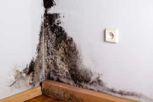 What You Don't Know About Mold Might Make You Very Sick… Financially