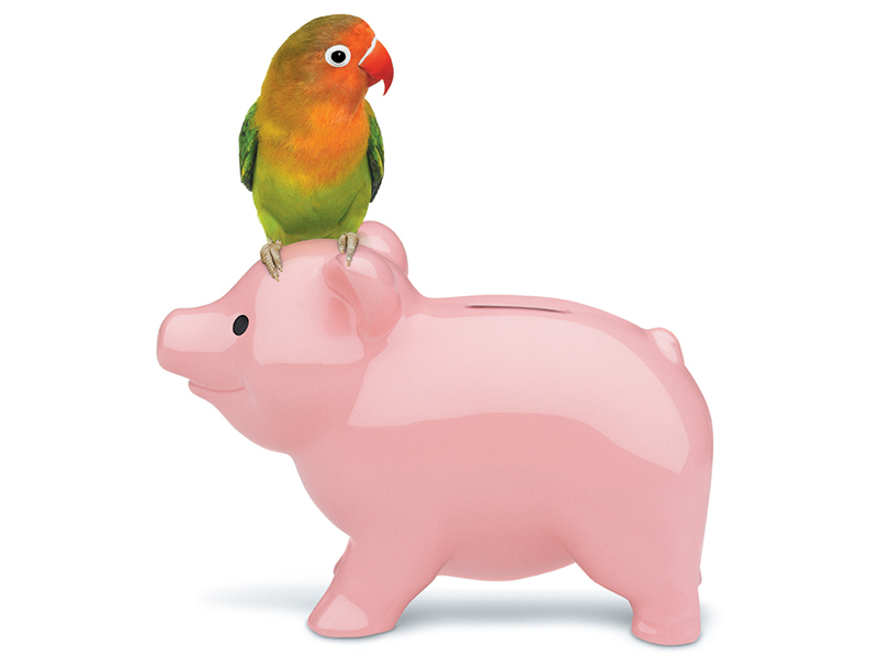 bird sitting on a piggybank