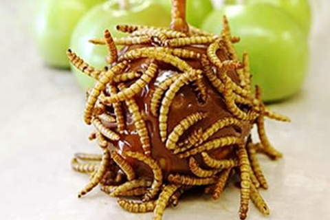 Mealworm Covered Caramel Apple