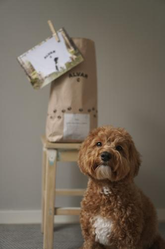 Cute dog and a chair in Alvar Pet branded content