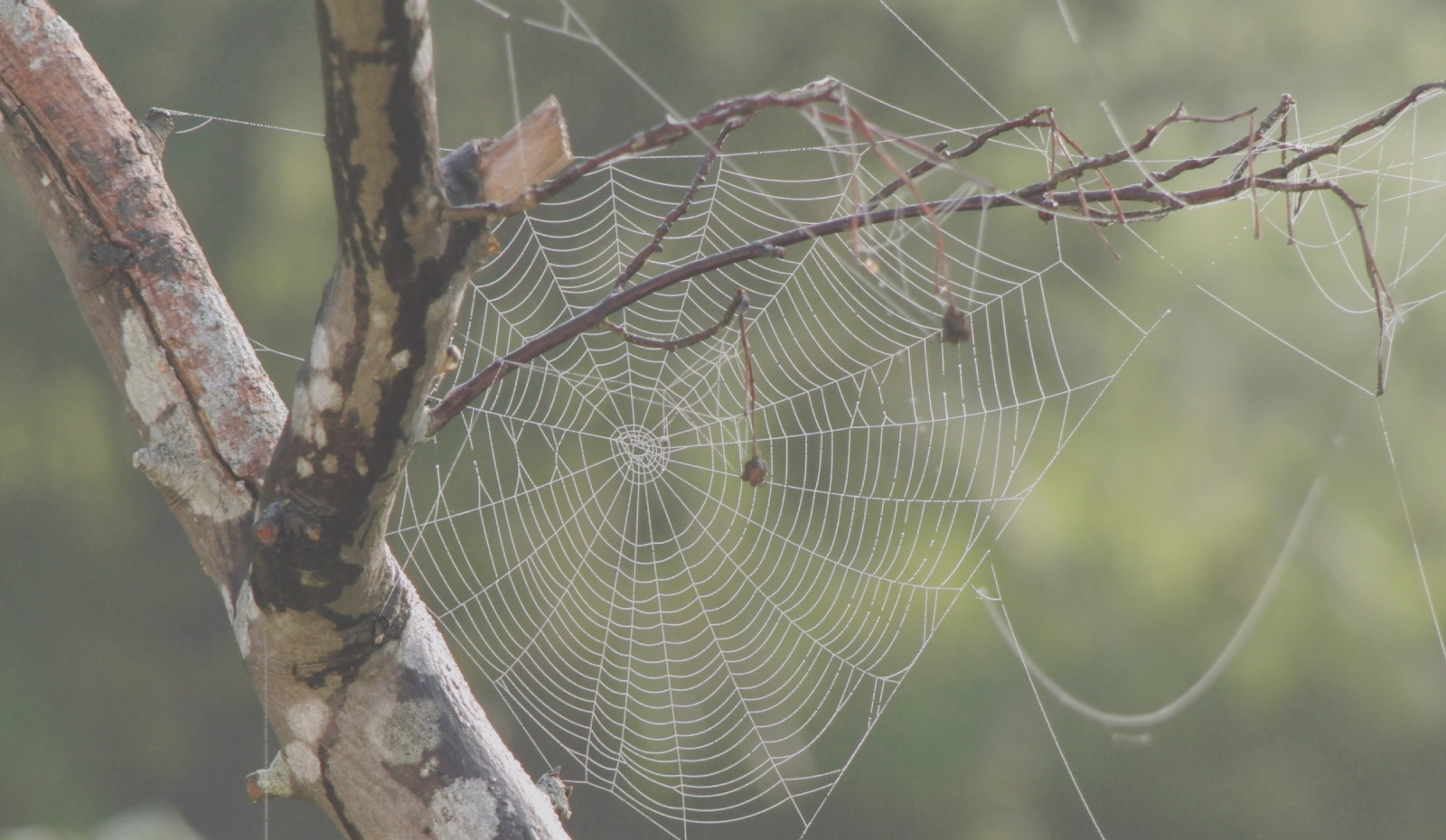 Hero Spider web lookgin like a graph oriented database