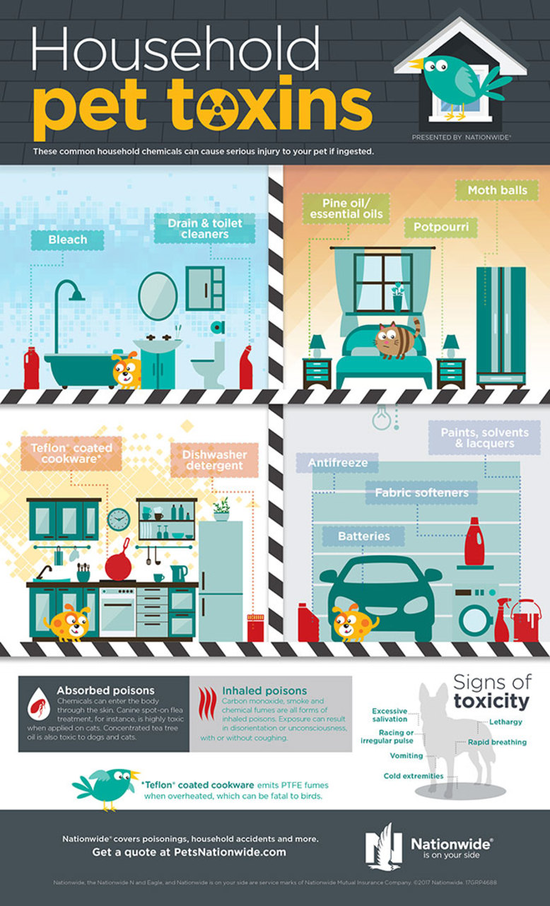 household-toxins-infographic