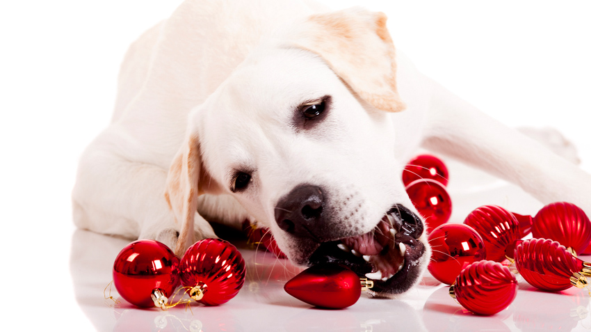 Top 5 Holiday Dangers to Pets