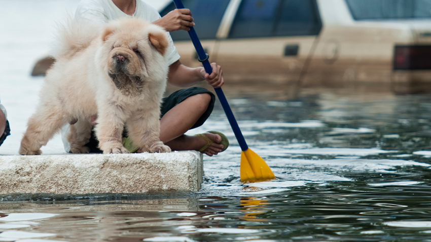 5 Natural Disaster Tips for Pet Owners