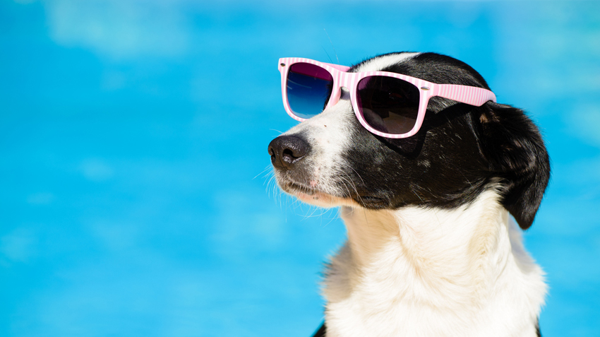 5 Cool Summer Gadgets for Dogs