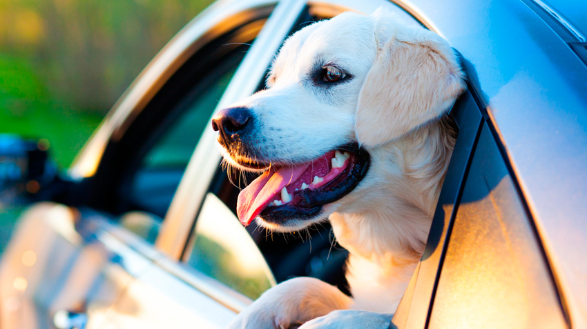 Travel Precautions for Pets