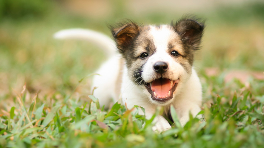 Top 10 Tips About Your New Puppy