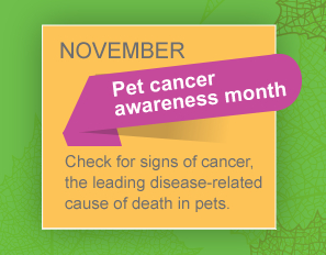 November is pet cancer awareness month. Check for signs of cancer, the leading disease related cause of death.