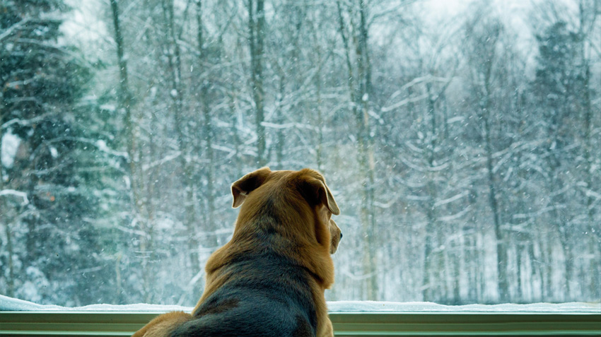 Pets Get the Winter Blues