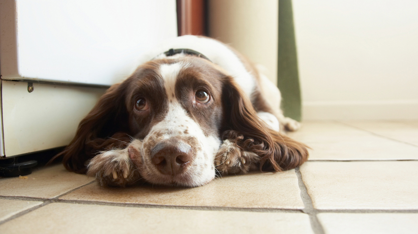 Most Common Pet Toxins