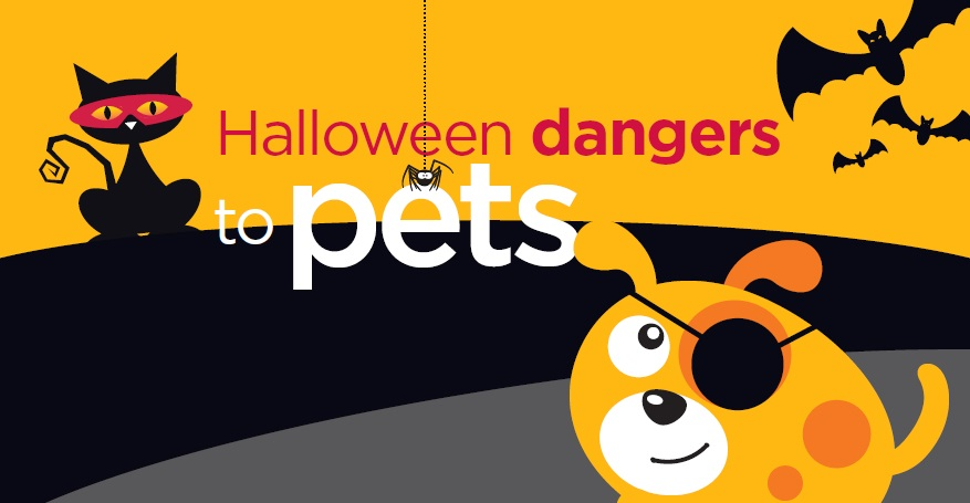 Halloween Fun and Foe for Dogs and Cats