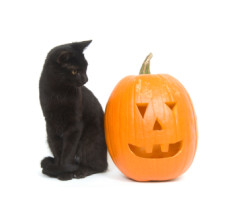 blackcatonhalloween