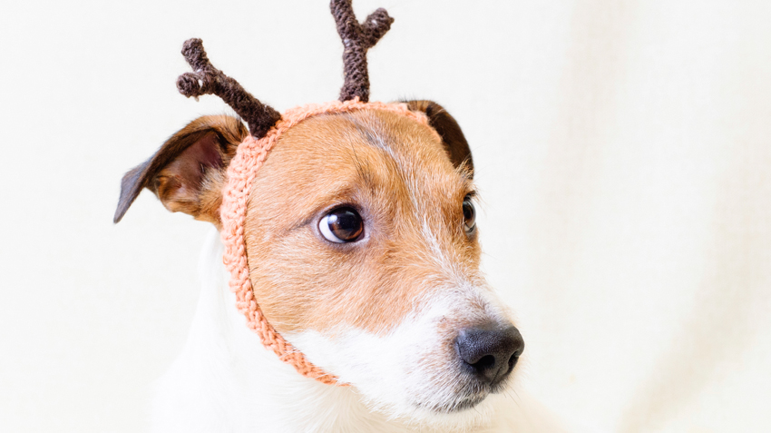 5 Ways Dogs are Like Reindeer