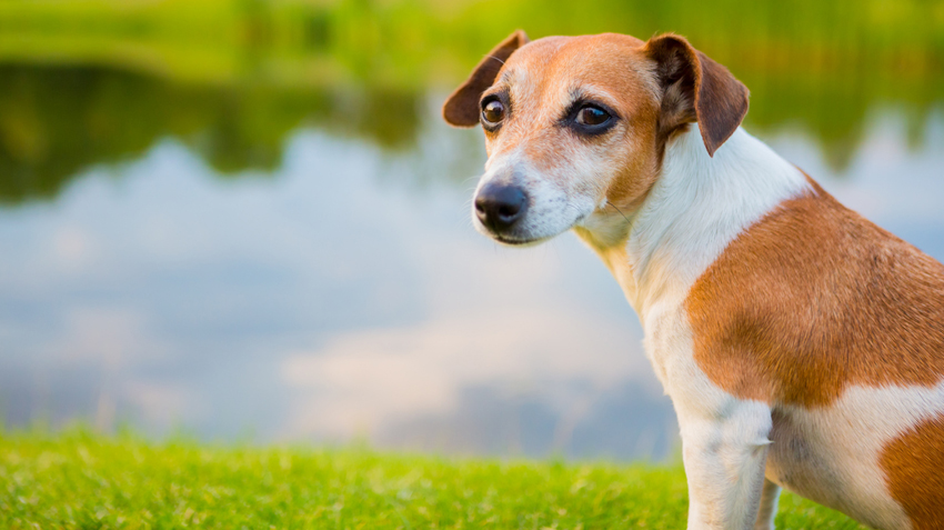 10 Reasons Your Dog Has Diarrhea