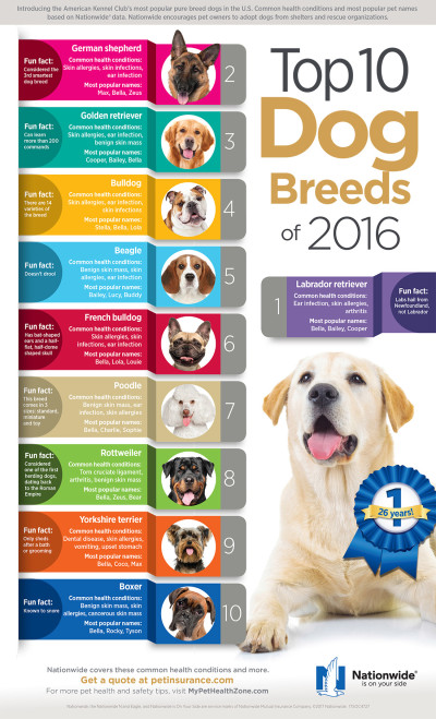 Top 10 Dog Breeds Infographic