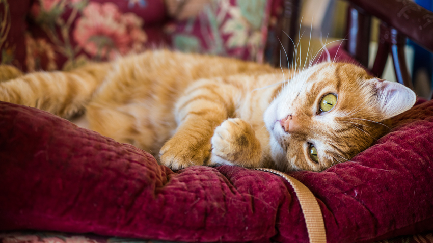 Common Ailments in Senior Cats