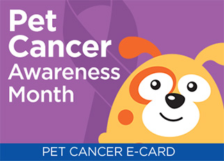 Pet cancer awareness month