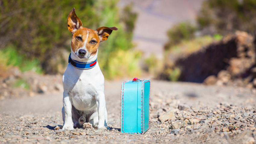 5 Mistakes to Avoid When Traveling with Pets