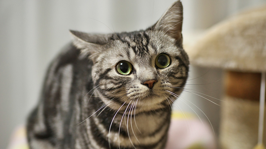 10 Of The Best Cat Breeds For Dogs Pet Health Insurance Tips