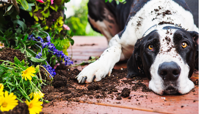 Gardens and Pet Toxicity