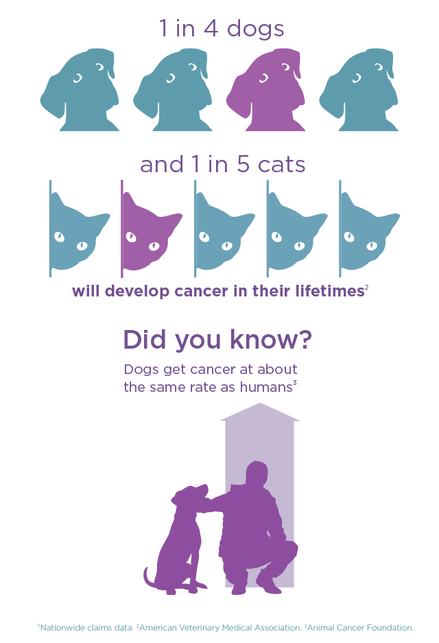 Dogs and cancer