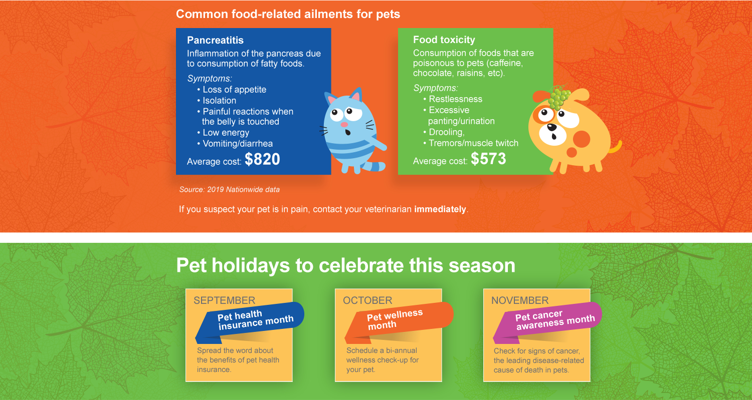 Common food-related ailments for pets. Pancreatitis: Inflammation of the pancreas due to consumption of fatty foods. Symptoms: ,Loss of appetite, Isolation, Painful reactions when the belly is touched, Low energy, Vomiting/diarrhea. Average cost: $820. 