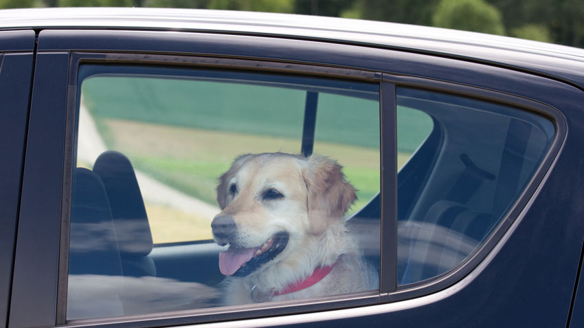 Hot Car Danger to Pets