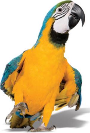 Pet Insurance for Birds & Exotics | Ferrets, Reptiles, Rabbits & More