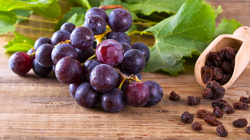 Raisin and Grape Toxicity in Pets
