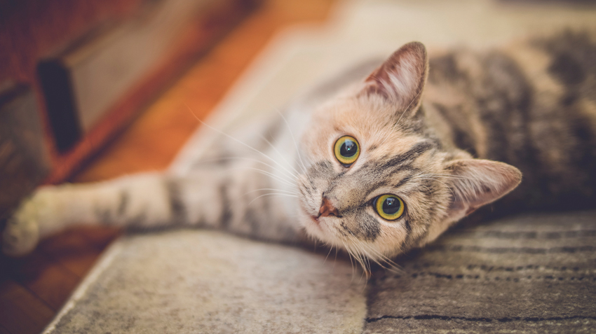 9 Tips for Choosing a Pet Sitter