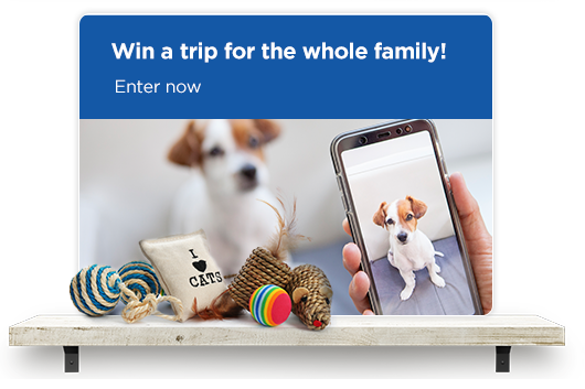 Win a trip for the whole family. Enter here!