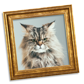 Cat in picture frame