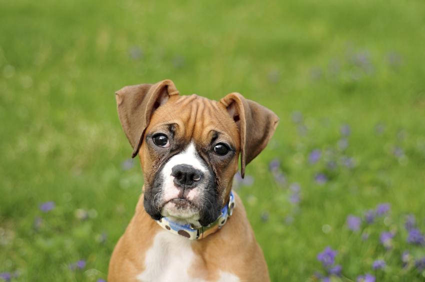 10 Best Dog Breeds For Kids Pet Health Insurance Tips